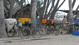 Image of bikes used to take the fish to sell at the market