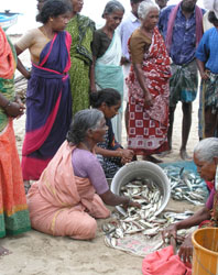Image of women sorting fish