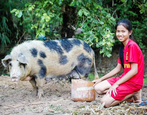 One Pig, Feed and Training for a Family