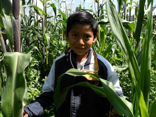 Children in Mexico need sustainable access to healthy food.